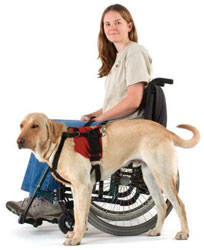 handicapped girl with service animal